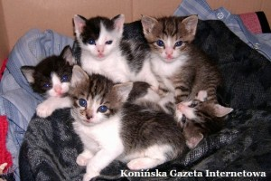 Koty 2