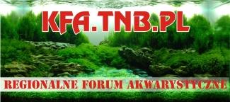 Koniskie-Forum-Akwarystyczne